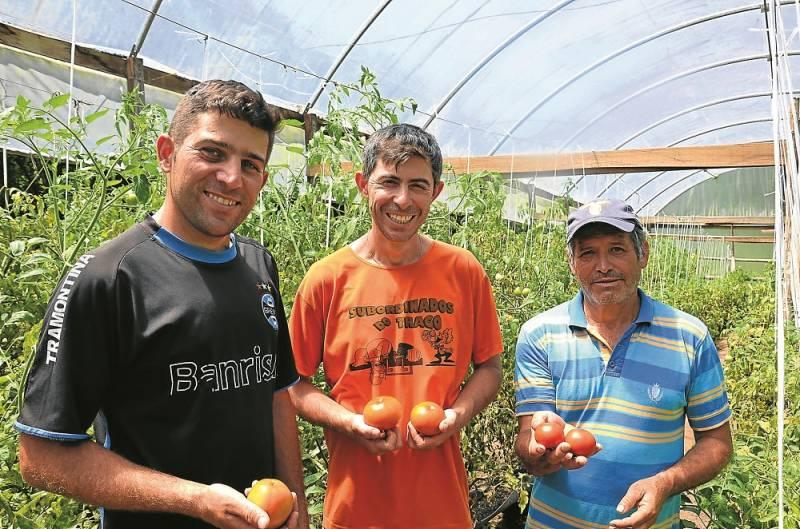 Alpídio e os filhos João e Paulo, diversificaram a produção e também atuam com cultivo orgânico