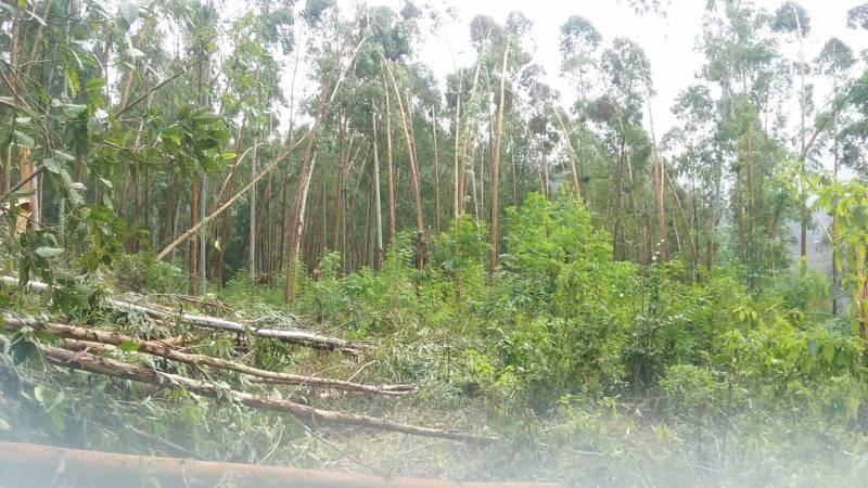 Queda de árvores sobre a rede elétrica foi um dos principais problemas
